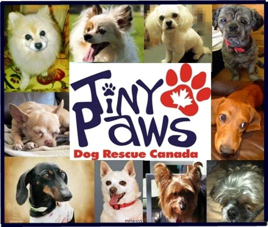 Tiny Paws Dog Rescue Canada - Online
