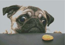 Cross Stitch Chart of a Pug trying to get a cookie