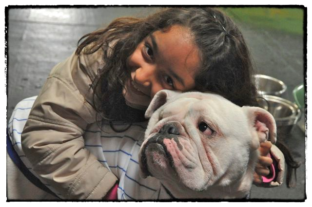 Adoptabull English Bulldog Rescue - Dog Adoption, Dog Rescue
