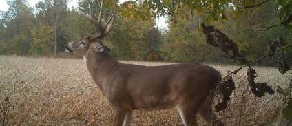 Kentucky Trophy Buck hunts