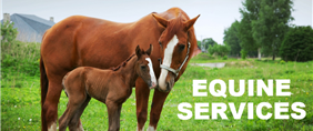 Countryside Equine Vets