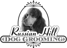Russian Hill Dog Grooming Express San Francisco Ca