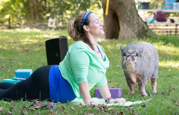 Yoga with Pigs