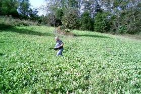kentucky food plot