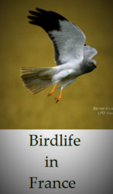 Bird-life-and-birds-you-will-see-in-France