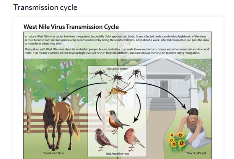 CDC West Nile Virus Transmission Photo