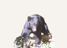 Hunting Black Bear Utah