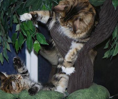 Realistic Look Cat Trees With Leaves