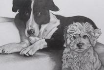 Pet portrait sketch drawing in pencil by artist Thomas Rogers