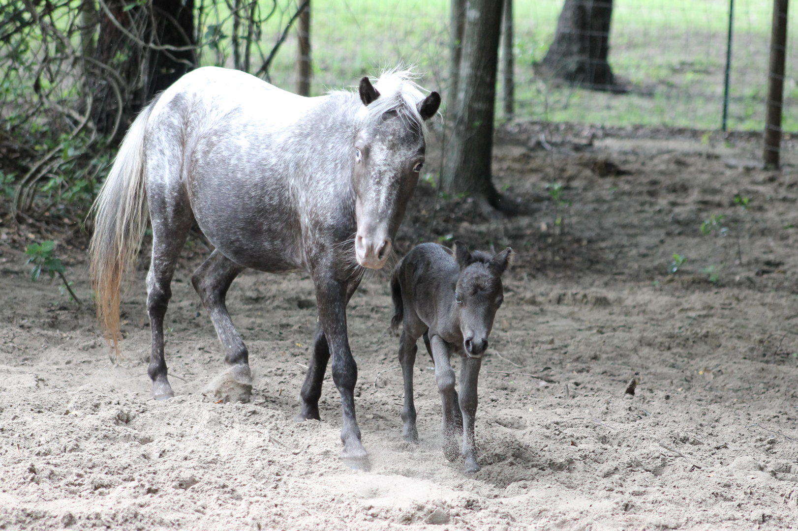 home horse rescue in the central florida area