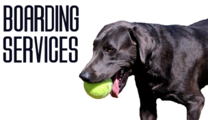 CMC DOG TRAINING: FLOWER MOUND- DENTON, DALLAS/FORT WORTH (DFW)