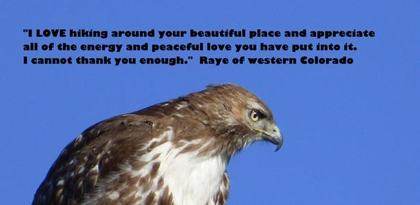 Hawk and sky photo and quote: I LOVE hiking around your beautiful place. Raye.