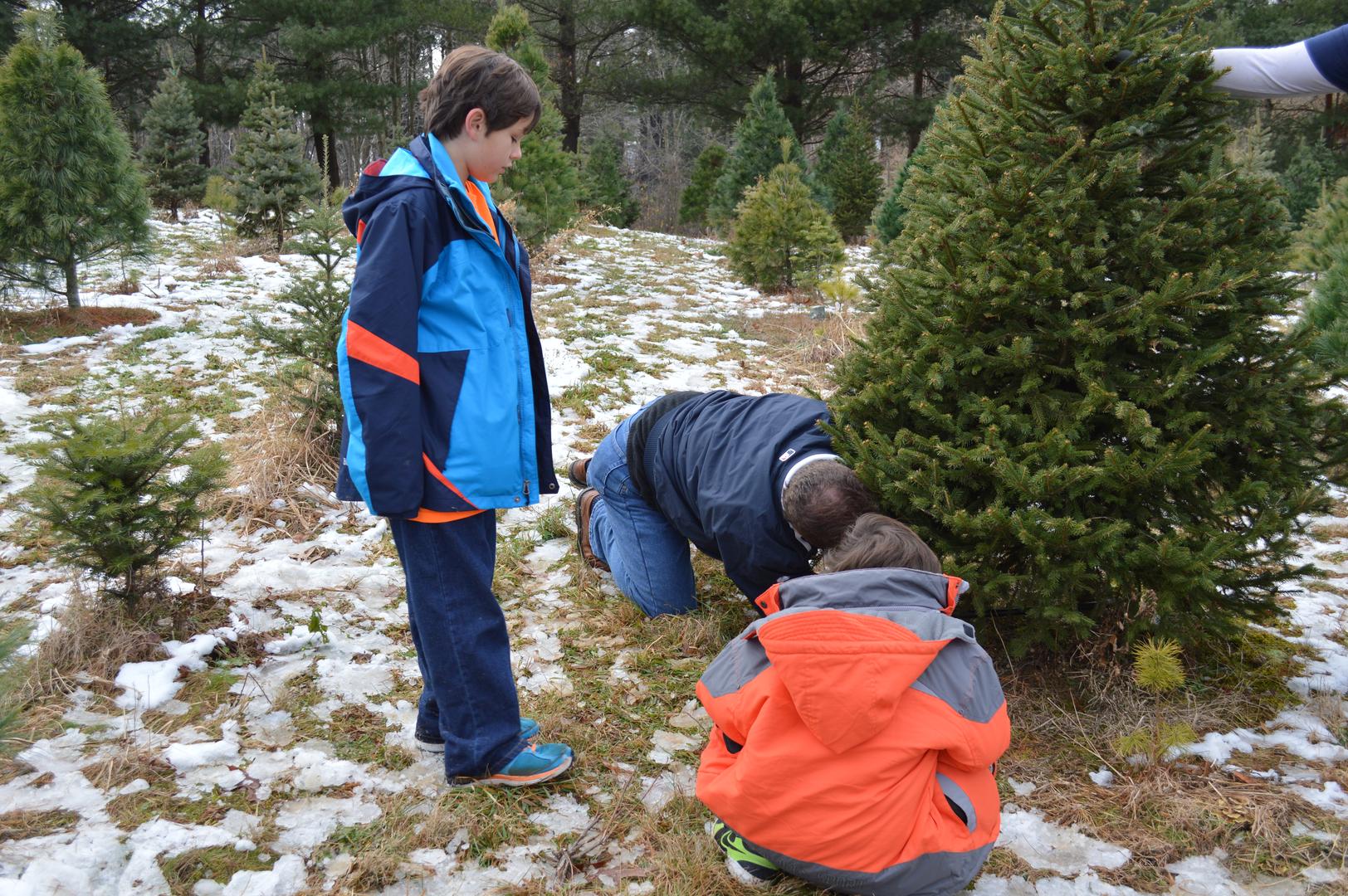 Christmas Tree Experience - Mm3 Associates, Llc - Cleveland, Oh