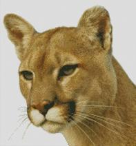 Cross Stitch Chart Pattern of a Cougar
