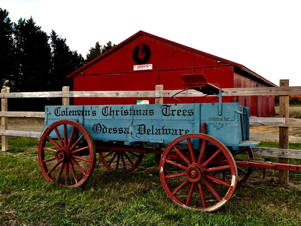 Coleman's Christmas Tree Farm - Coleman's Christmas Tree Farm