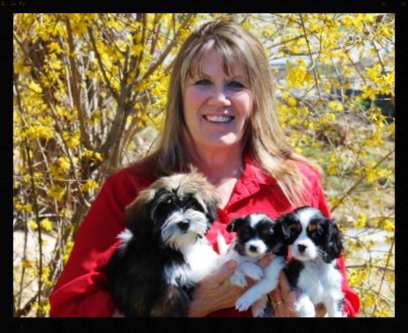 Havanese, Cavalier and Papillon Puppies - Colorado Breeders - Cottonwood Puppies