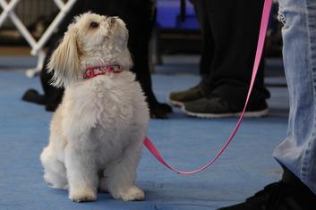 Basic Obedience Class At RiverRun Dog Training