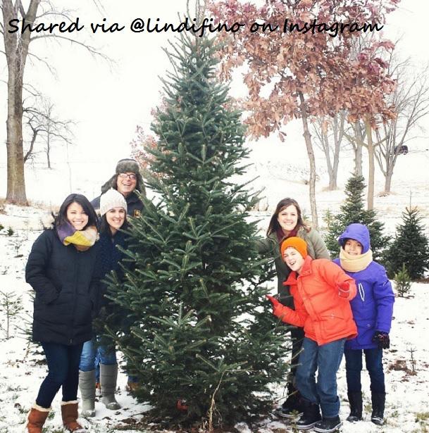 Copyright © Camelot Christmas Tree Farm - News/Social