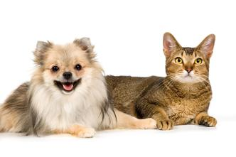 Reiki for cats and dogs