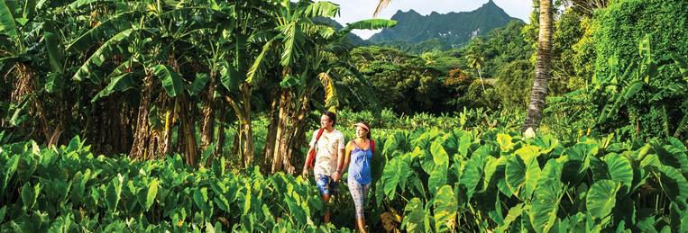 Cook Islands , Rarotonga, Taro patch tourist walk