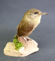 Adrian Johnstone, professional Taxidermist since 1981. Supplier to private collectors, schools, museums, businesses, and the entertainment world. Taxidermy is highly collectable. A taxidermy stuffed Wren (9661), in excellent condition.