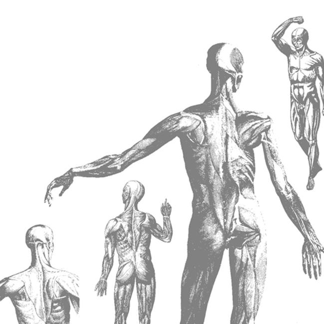 Muscle Puzzles Anatomy Teaching Tools Anatomy Workshops Test