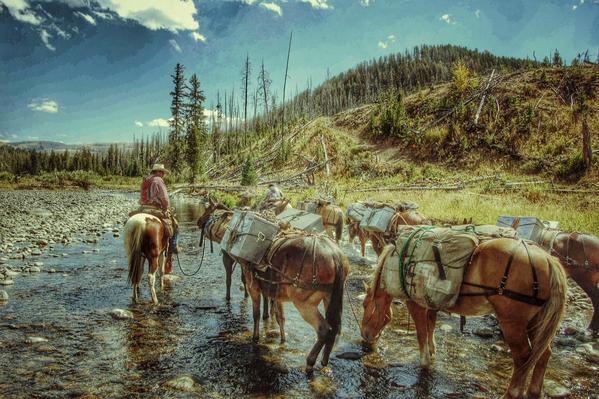 Yellowstone Pack Trips, pack horses, cache creek, Yellowstone National Park