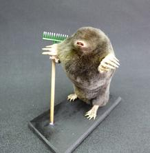 Adrian Johnstone, professional Taxidermist since 1981. Supplier to private collectors, schools, museums, businesses, and the entertainment world. Taxidermy is highly collectable. A taxidermy stuffed Gardening Mole With Rake (54), in excellent condition.