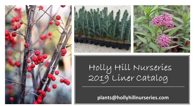 2018 Holly Hill Nurseries Catalog