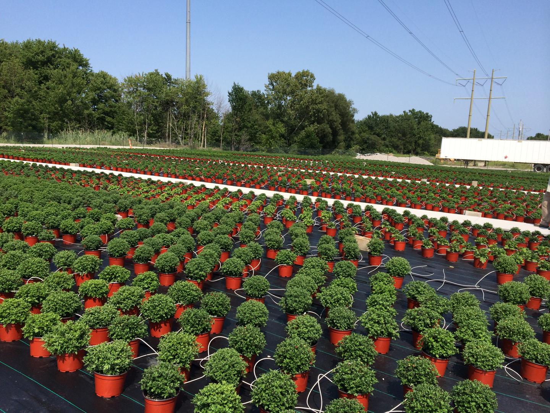 maria gardens center quality plants landscape supply landscape materials nursery garden center