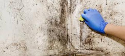 MOLD CLEANING SERVICES FROM ABQ HOUSEHOLD SERVICES