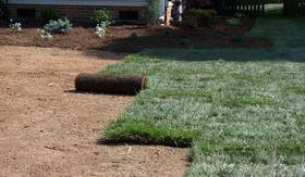 Fresh Sod and Seeding Services for Your Lawn