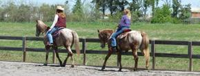 Tennessee State Appaloosa Horse Club