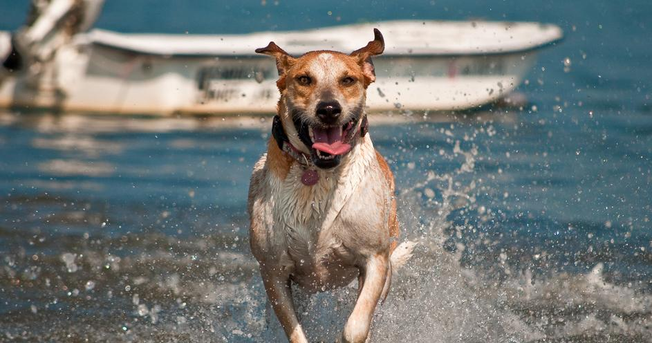 Home eastern shores best self serve dog wash solutioingenieria Choice Image