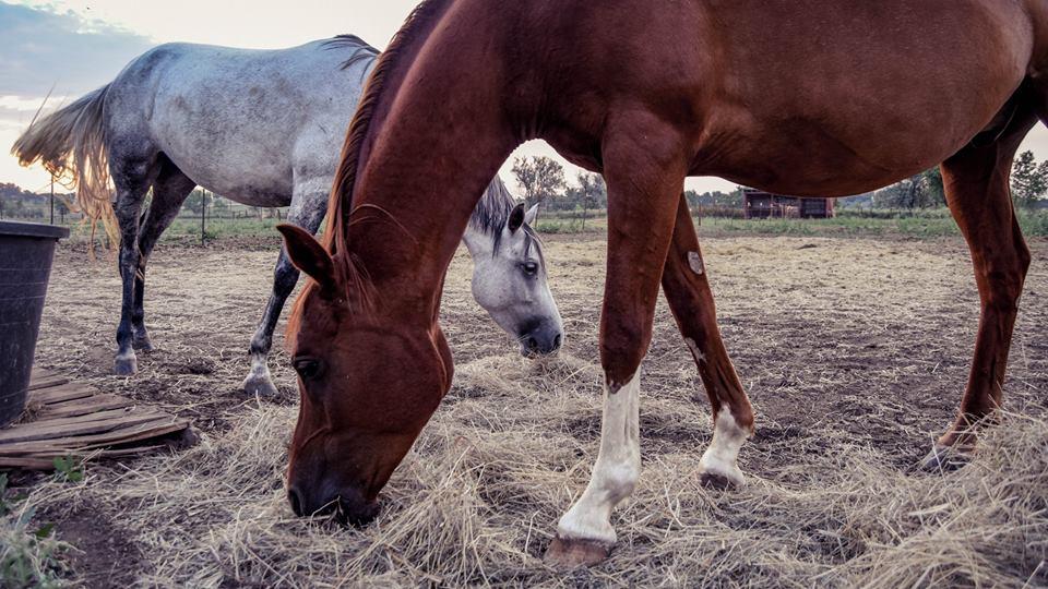 M & M Equestrian Center