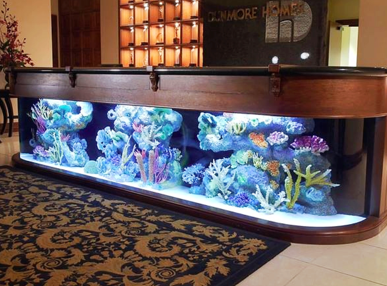 custom commercial space fish tank in hotel lobby