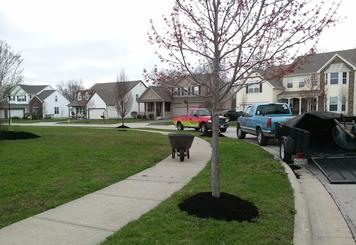 Landscape, Landscape design, OneLove Lawn, 43123, Grove City, Galloway, Commercial pt., Darbydale, Harrisburg, West Gate, Landscape Professional, Landscapers, Mulch Installation, Garden Design, edging, Spring clean up