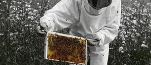 St_Louis_saint_louis_beekeeping_bee_removal_missouri