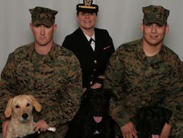 ptsd service dogs, veterans service dogs, service animals for veterans