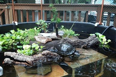 tank outdoors - Homemade Turtle Tanks: Turtle Aquariums A Turtle Tank ...