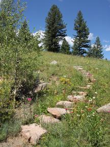 Natural stairs created by Wild Earth Gardens