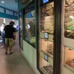 Things to do - browsing reptile zoo