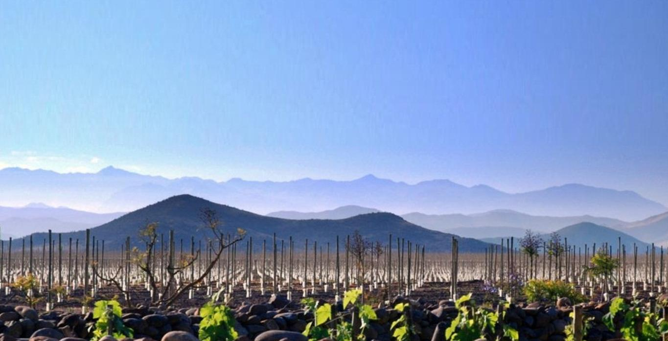 Background Photo of a vineyard and horizon in the Aconcagua Valley, Chile