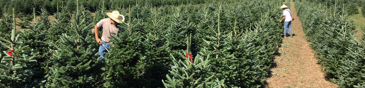 join us at riverview christmas tree farm in canton sd also check out our riverview christmas tree farm pumpkins festival in october - How To Start A Christmas Tree Farm