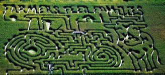 Picture of Hank's Corn Maze