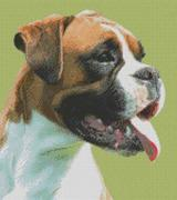 Cross Stitch Chart of a Boxer Dog looking to his left