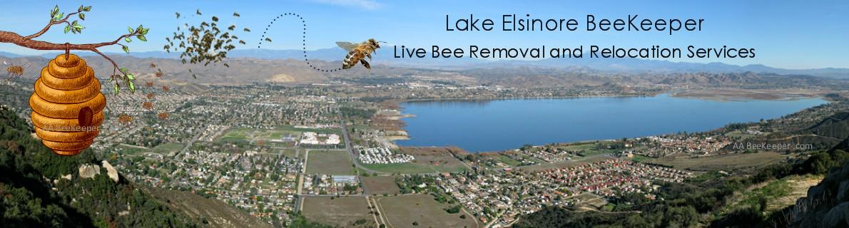Lake Elsinore Bee Removal Services