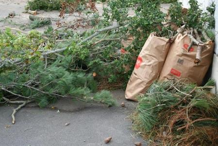 Yard Waste Removal Yard Waste Trees Branches Leaf Removal Service and Cost | Lincoln NE | LNK Junk Removal