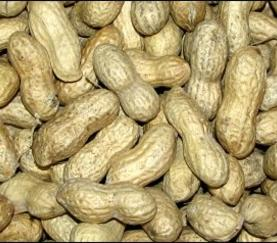 Remington Feed carries raw peanuts by the pound, 25 pounds or 50 pounds. A treat for your birds or other small animals.