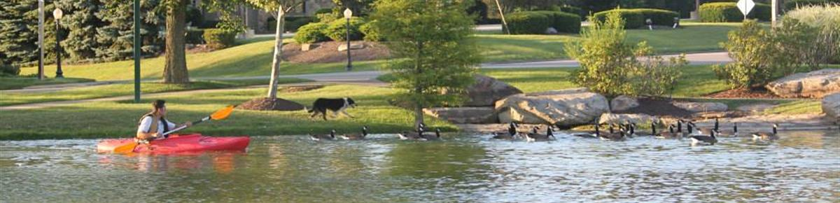 Geese Police of Western Pennsylvania PA man and boarder collie chasing canada geese